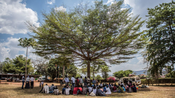 A large group of people sit underneath a big tree.