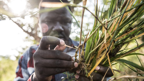A man examines black fly larvae found near the the Agogo river in northern Uganda.