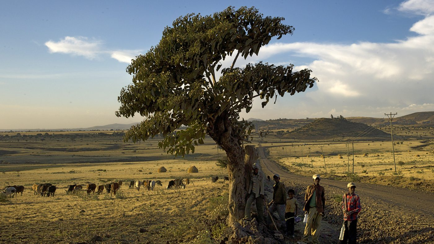 Children stand under a tree in Ethiopia with rolling fields in the background.