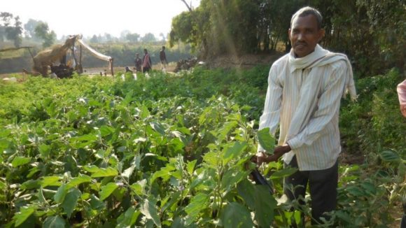 Govardhan, who suffers from sight loss, grows brinjal in India.