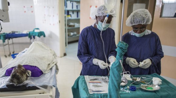 Two medical staff in the operating theatre preparing for a cataract operation.