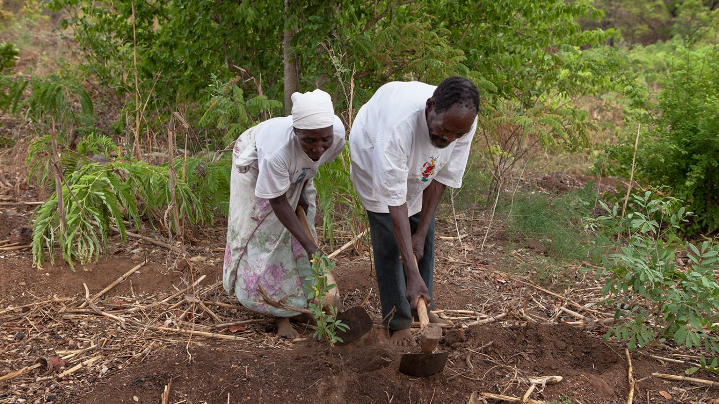 Winesi and his wife work in the fields near their home.