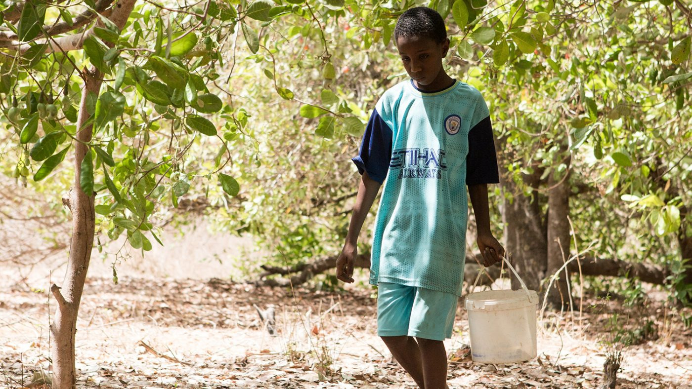 A boy walks among trees holding a bucket.