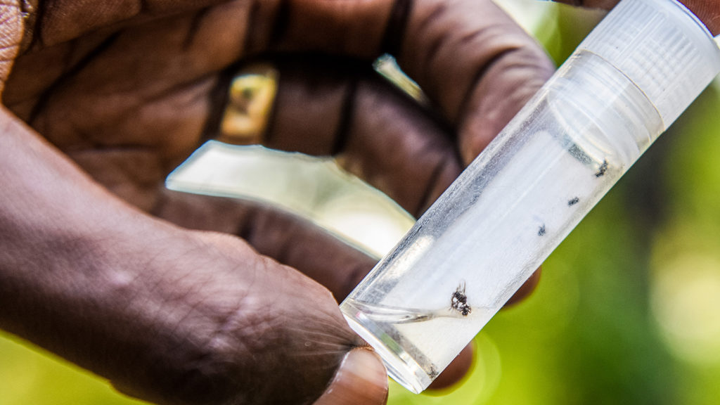 A close-up of a plastic vial containing the flies that transmit river blindness.