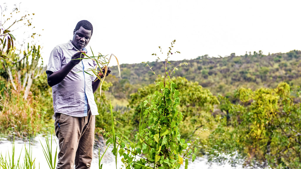 A river blindness worker stands beside a river inspecting reeds for signs of black flies that carry the disease.