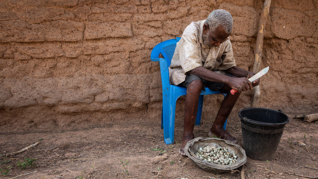 Emmanuel cutting cashew nuts outside his home.