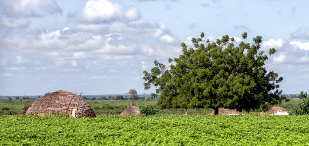 A landscape of a Nigerian village featuring trees and homes.