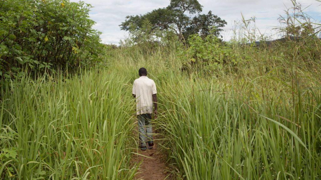 A man walks down a path through high grass.