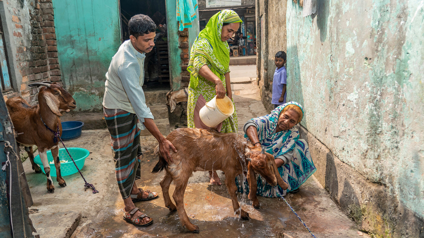 Two women and a man wash a goat.